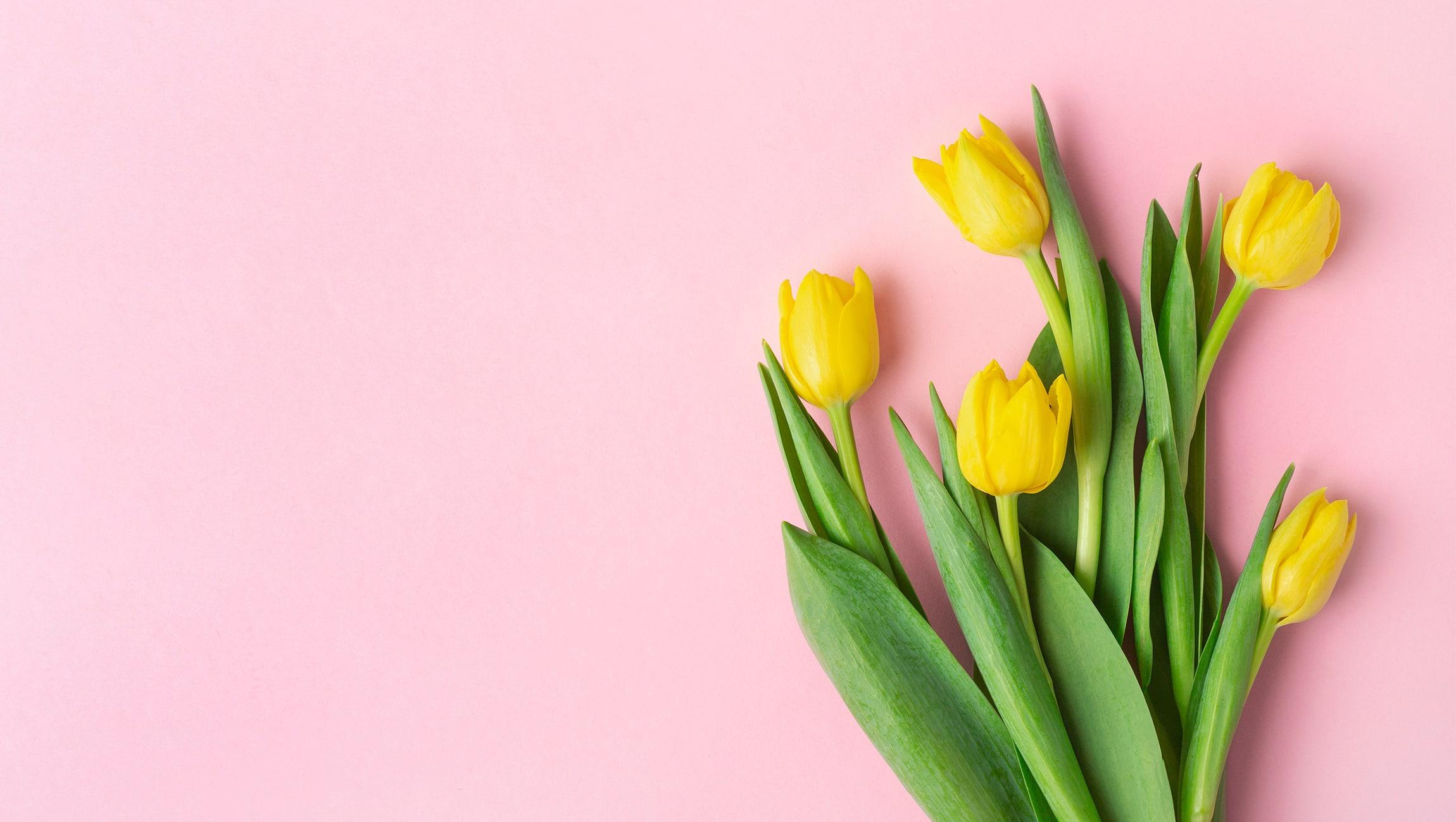 Gelbe Tuplen vor rosa Hintergrund